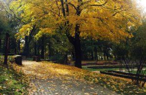"""jesień""""_2"""